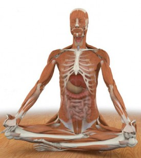 Yoga Anatomy And Alignment Immersion With Chris Dunphy And